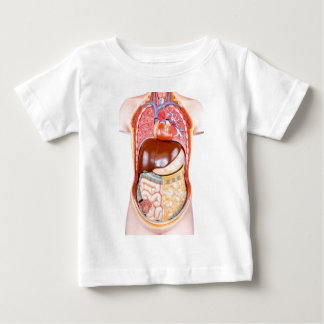 Plastic human torso model with organs on white baby T-Shirt