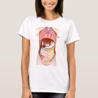 Plastic human torso model with organs on white T-Shirt