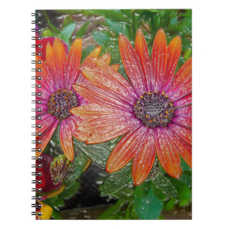 Plastic wrap notebook