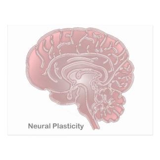 Plasticidad de los nervios tarjetas postales