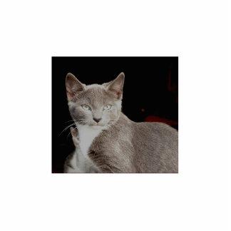 Plata - escultura salvaje de la foto del gato fotoescultura vertical