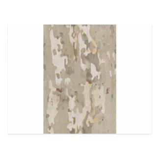 Platan bark texture postcard