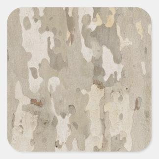Platan bark texture square sticker