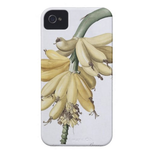 Plátano, 1816 iPhone 4 protector