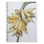 Plátano, 1816 note book