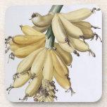 Plátano, 1816 posavasos de bebidas