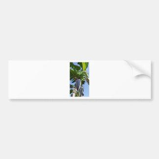 plátano fresco etiqueta de parachoque