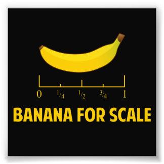 Plátano para la escala fotografía