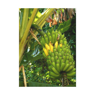 Plátanos de Apple hawaianos Impresión En Lienzo