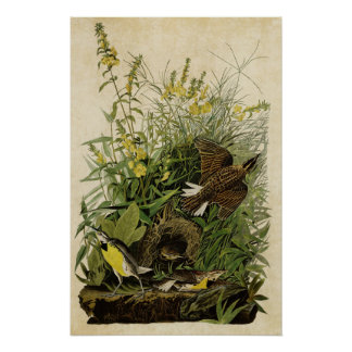 Plate 136 | Meadow Lark | Birds of America Poster