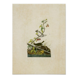 Plate 143 | Golden-Crowned Thrush Print