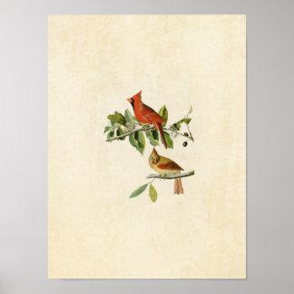 Plate 159 | Cardinal Grosbeak | Birds of America Poster