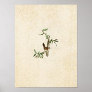 Plate 18 | Bewick's Wren | Birds of America Posters