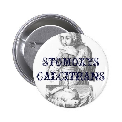 Plate_20_6_20_extract_300px, STOMOXYS CALCITRANS Pinback Buttons