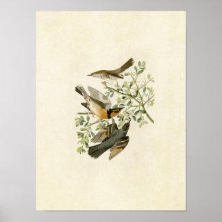 Plate 369 | Mountain Mockingbird & Varied Thrush Poster