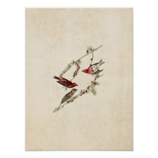 Plate 4 | Purple Finch | Birds of America Poster