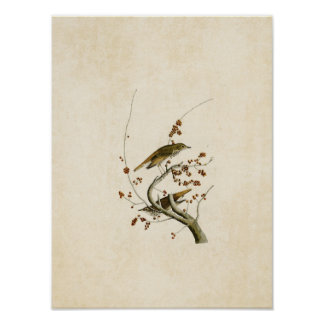 Plate 58 | Hermit Thrush | Birds of America Poster