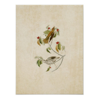 Plate 73 | Wood Thrush | Birds of America Posters