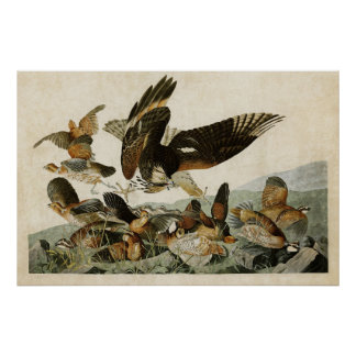Plate 76 | Virginian Partridge | Birds of America Poster