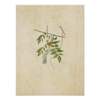 Plate 95 | Yellow-Poll Warbler | Birds of America Poster
