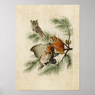 Plate 97 | Little Screech Owl | Birds of America Poster