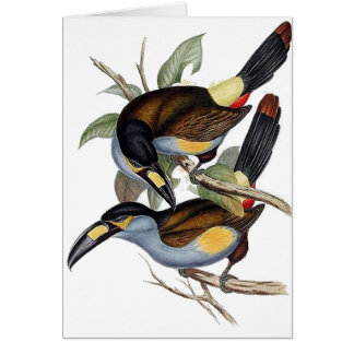 Plate-billed Mountain Toucan Card