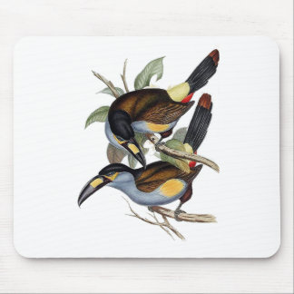 Plate-billed Mountain Toucan Mouse Pad