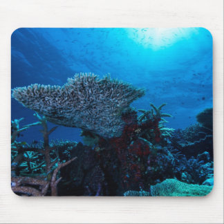 Plate Coral on the Great Barrier Reef Mousepad