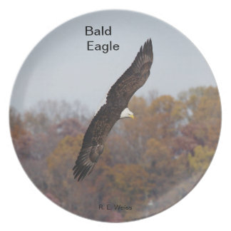 Plate depicting a Bald Eagle in flight.