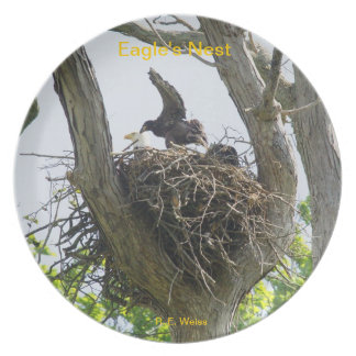 Plate depicting a Bald Eagle's nest