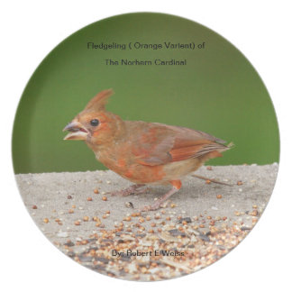 Plate depicting an orange varient ot the Cardinal.