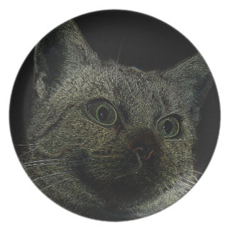Plate Neoncat