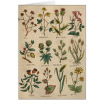 Plate of Plants Card