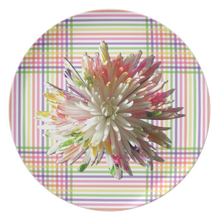 Plate - Painted Spider Mum on Grid
