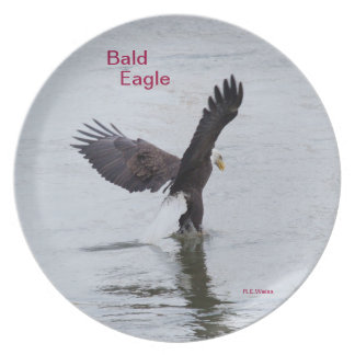 Plate showing a Bald Eagle fishing.