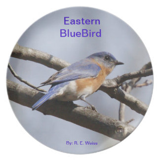 Plate showing the Eastern BlueBird