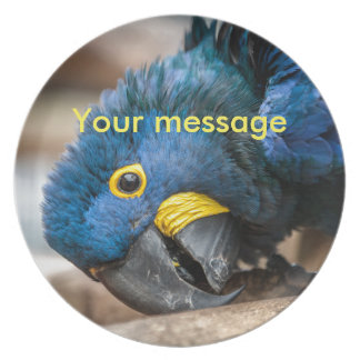 Plate with blue Hyacinth Macaw parrot