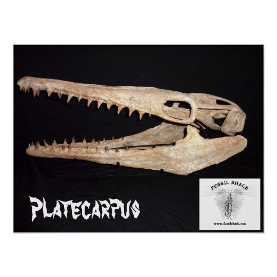 Platecarpus Mosasaur Skull Poster