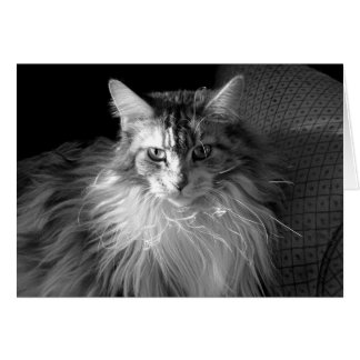 Platee el Tabby remendado con el gato de Coon Tarjeta De Felicitación