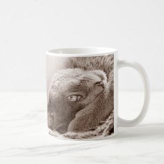 Platee la taza del gato