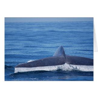 Platija de la ballena azul II Tarjeta De Felicitación