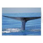 Platija de la ballena azul tarjeta