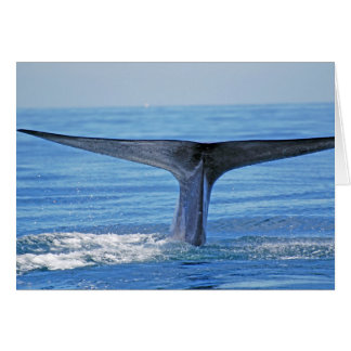 Platija de la ballena azul tarjeta de felicitación
