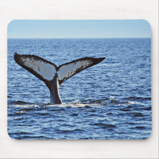 Platija de la ballena jorobada II, Victoria, A.C. Alfombrillas De Ratón