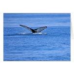 Platija de la ballena jorobada tarjeta de felicitación