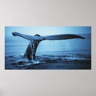 Platija de la ballena póster