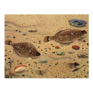 Platijas de los pescados planos del vintage, vida tarjeta postal