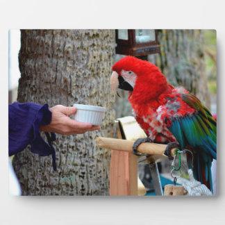 plato ofrecido bebé del macaw del escarlata placas de plastico