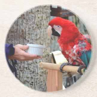 plato ofrecido bebé del macaw del escarlata posavasos de arenisca