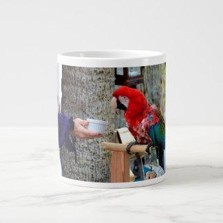 plato ofrecido bebé del macaw del escarlata taza grande